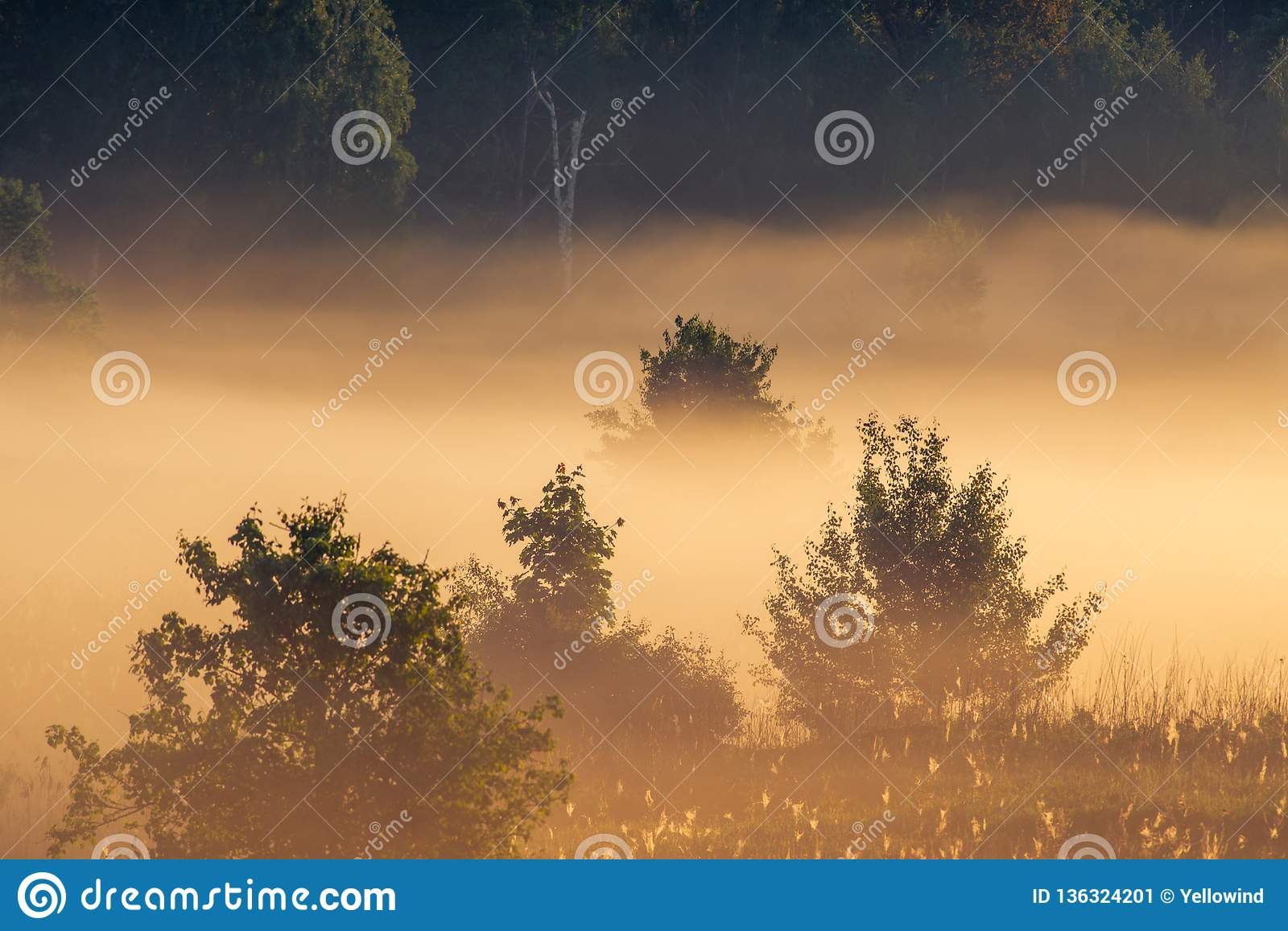 Sunrise landscape of trees in misty morning
