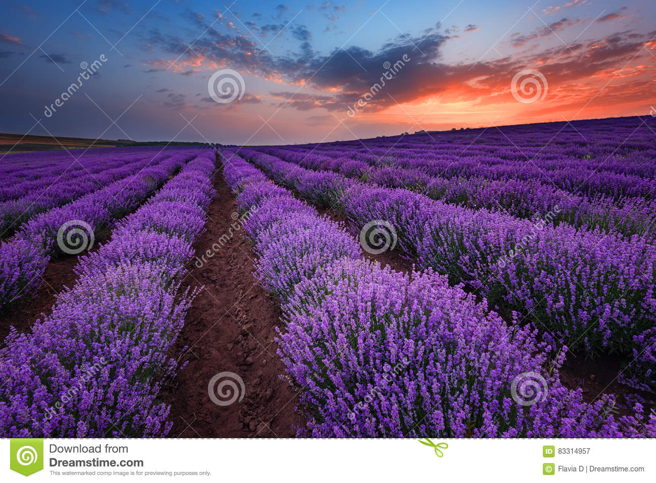 Sunrise at lavender field near the town of Burgas, Bulgaria
