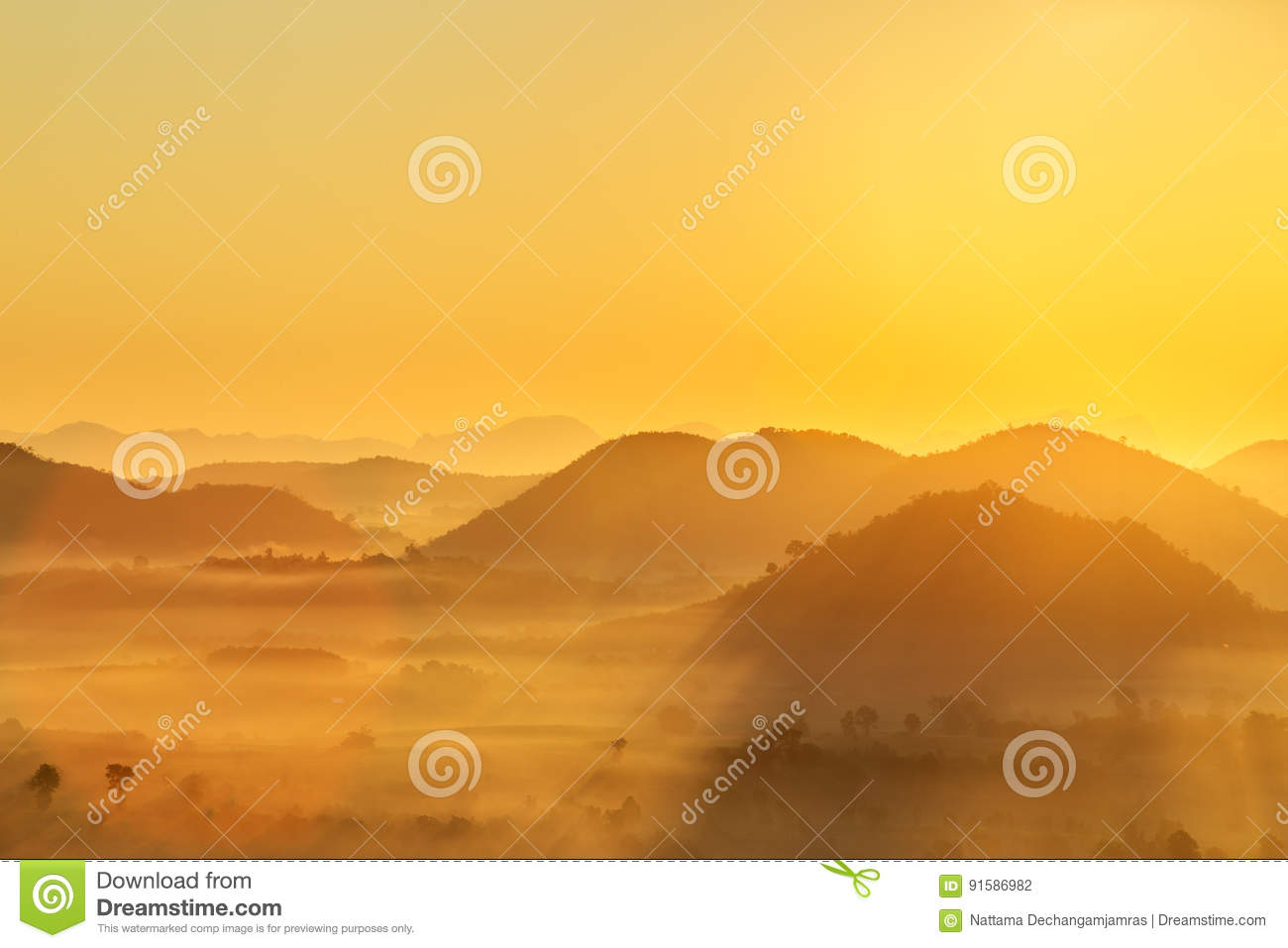 Sunrise and The Mist with Yellow Flowers Foreground in Winter ,This`s Mountain looks like Mount Fuji in Japan., Landscape at Phu H