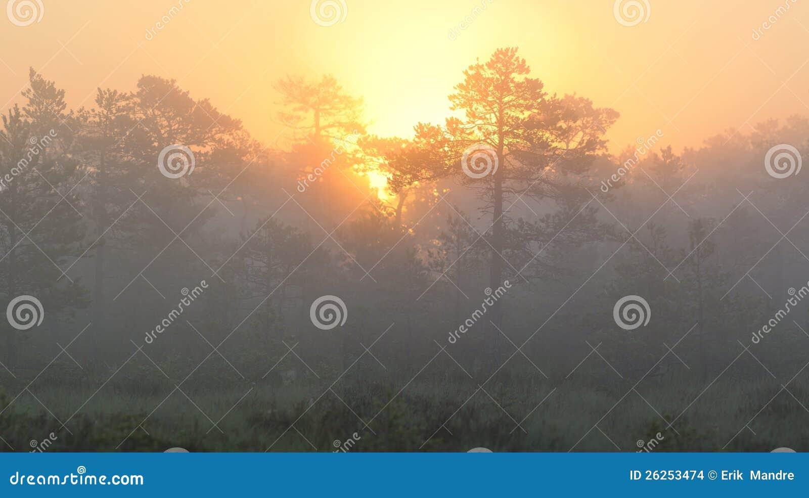 Sunrise in misty bog