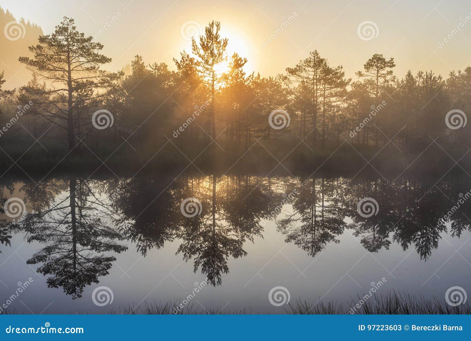 Sunrise in the misty bog during summer