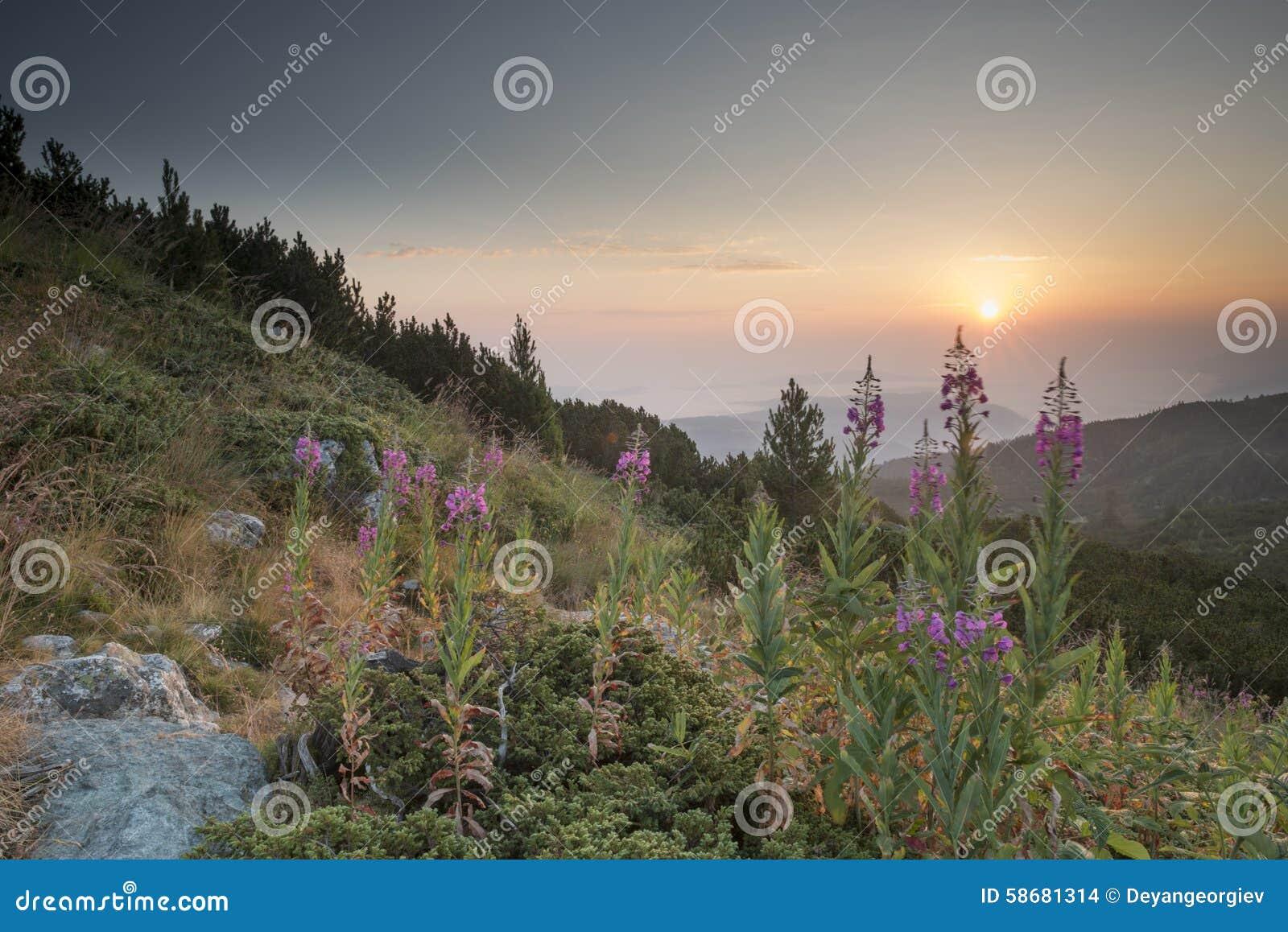 sunrise mountains flowers - photo #23