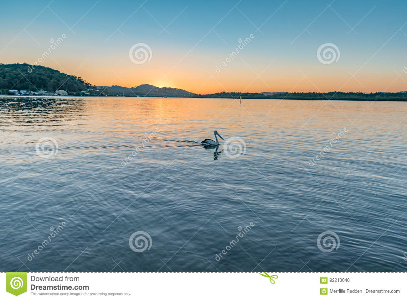 Sunrise over the bay with pelican