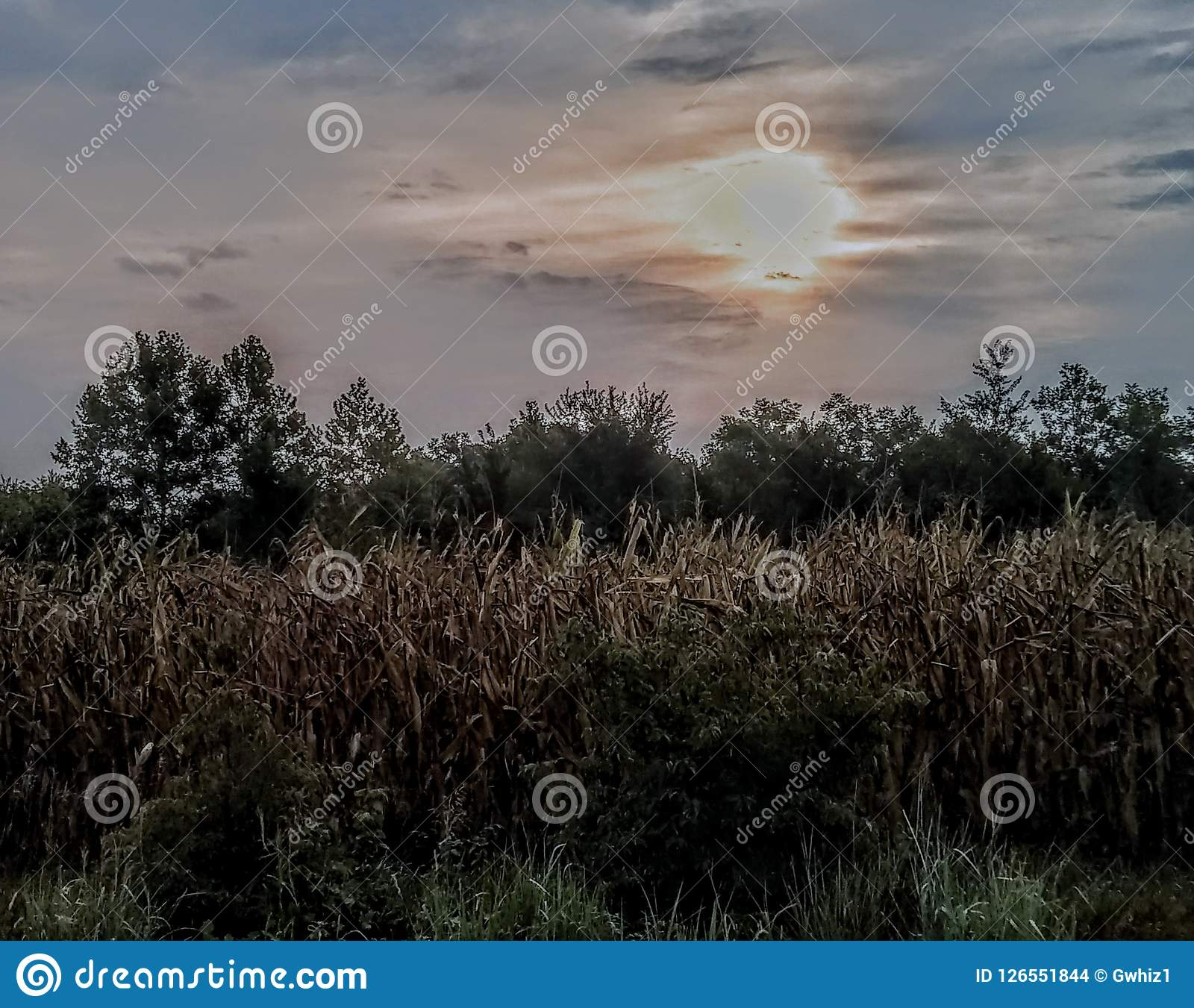 Sunrise over corn field