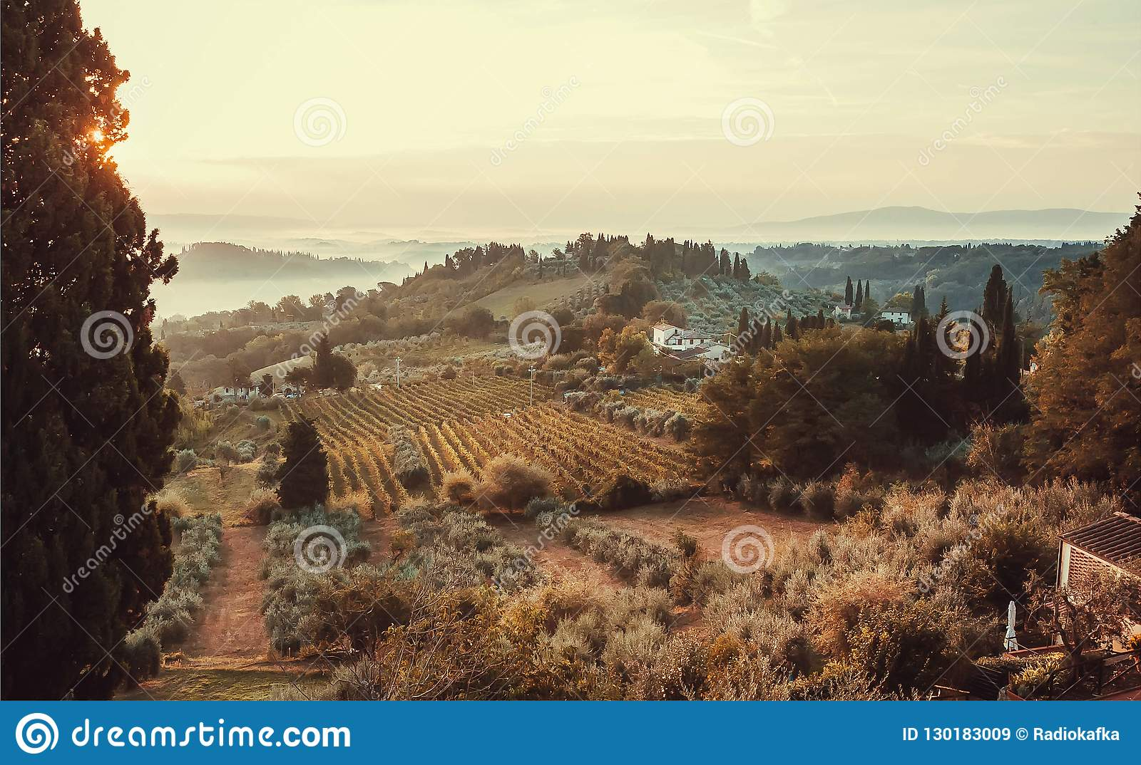 Sunrise over fields of Tuscany. Wineyards, garden trees, villas of countryside at early morning time, Italy