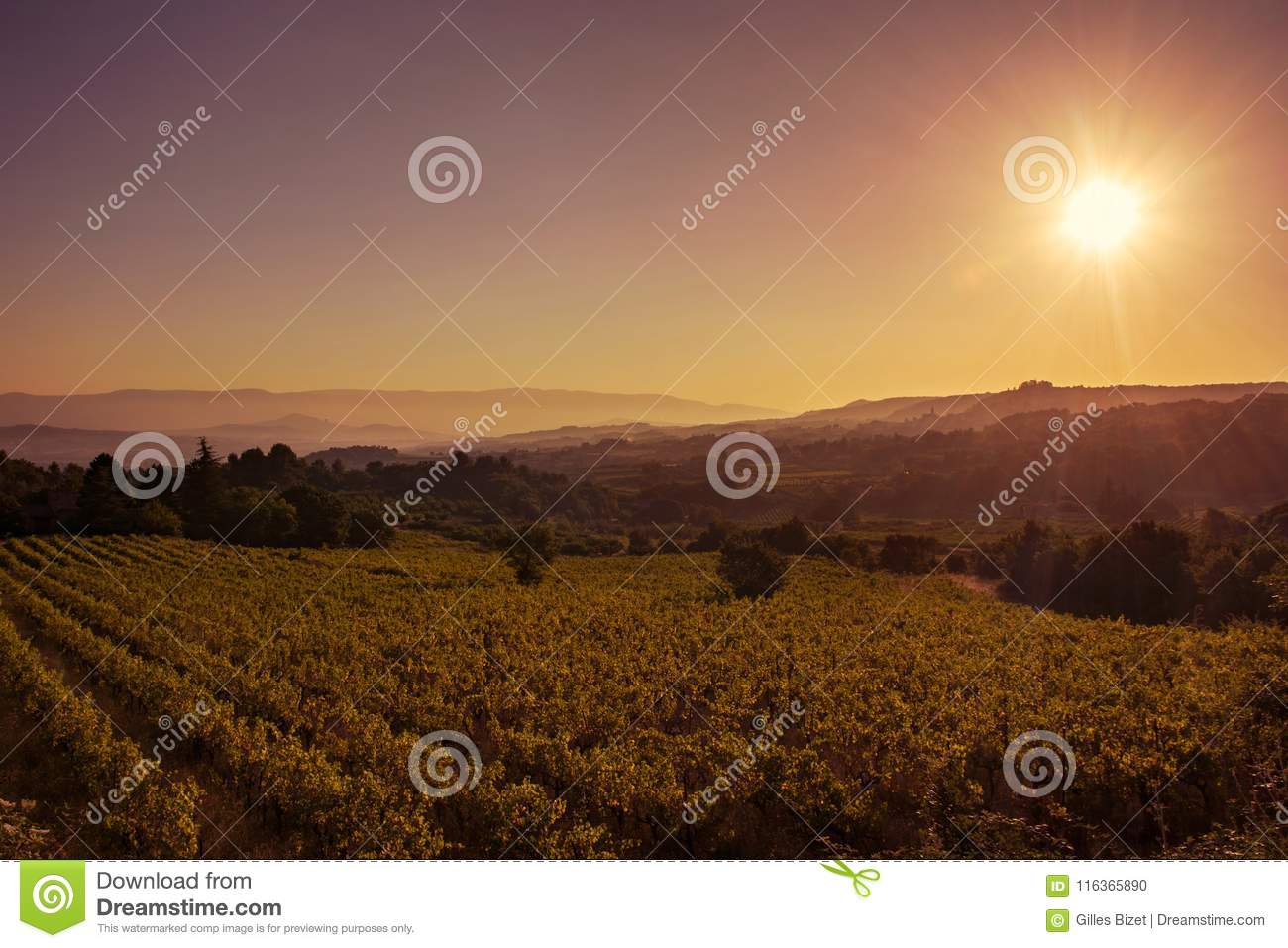 Sunrise on the Provencal vineyard