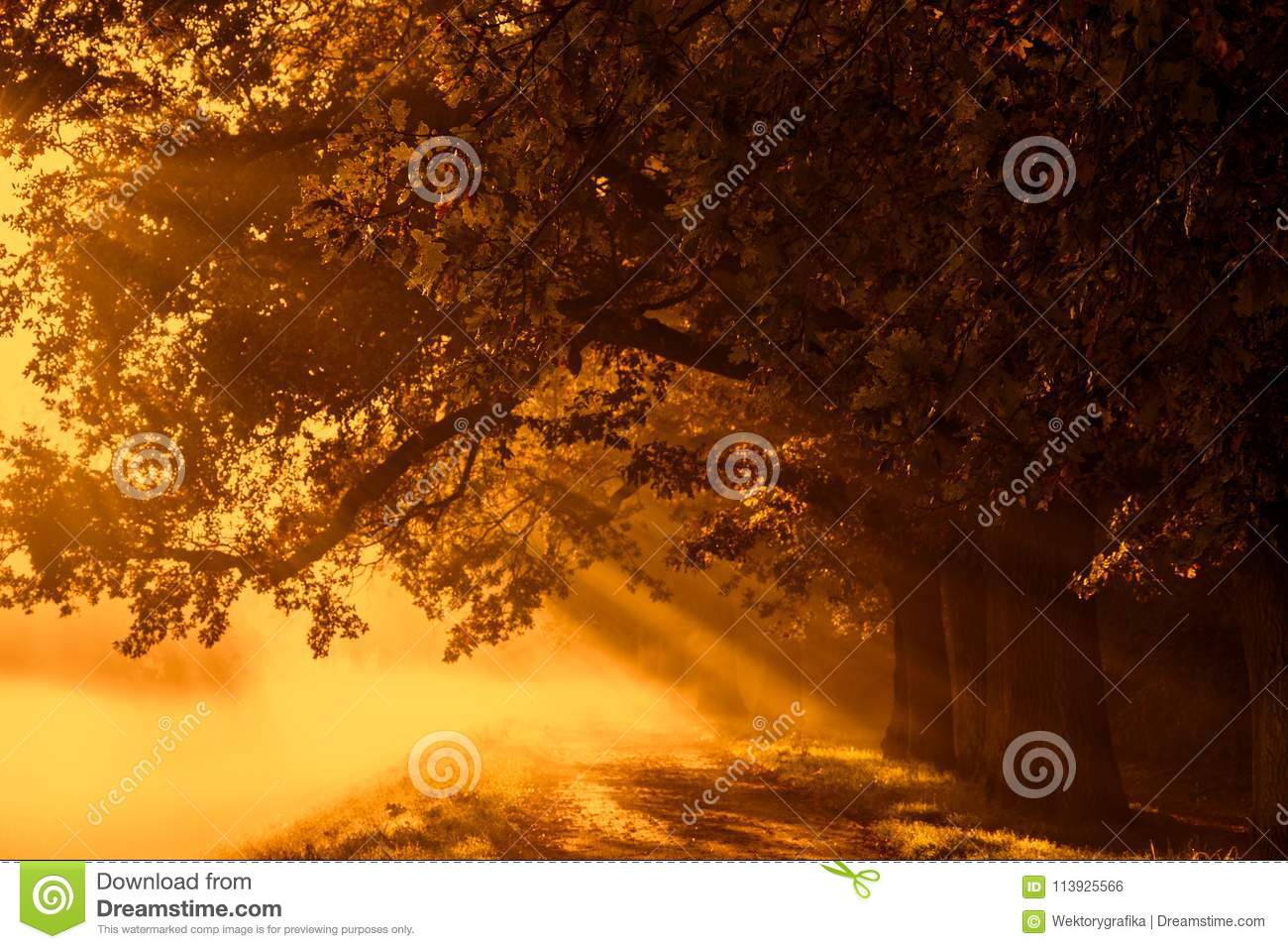Sunrise with rays on the background of a foggy mysterious path i