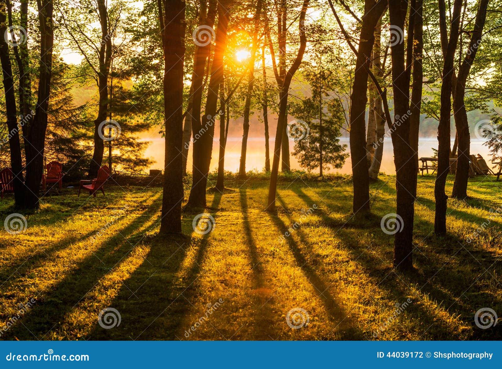 Sunrise Through The Trees Across A Misty Lake Stock Photo
