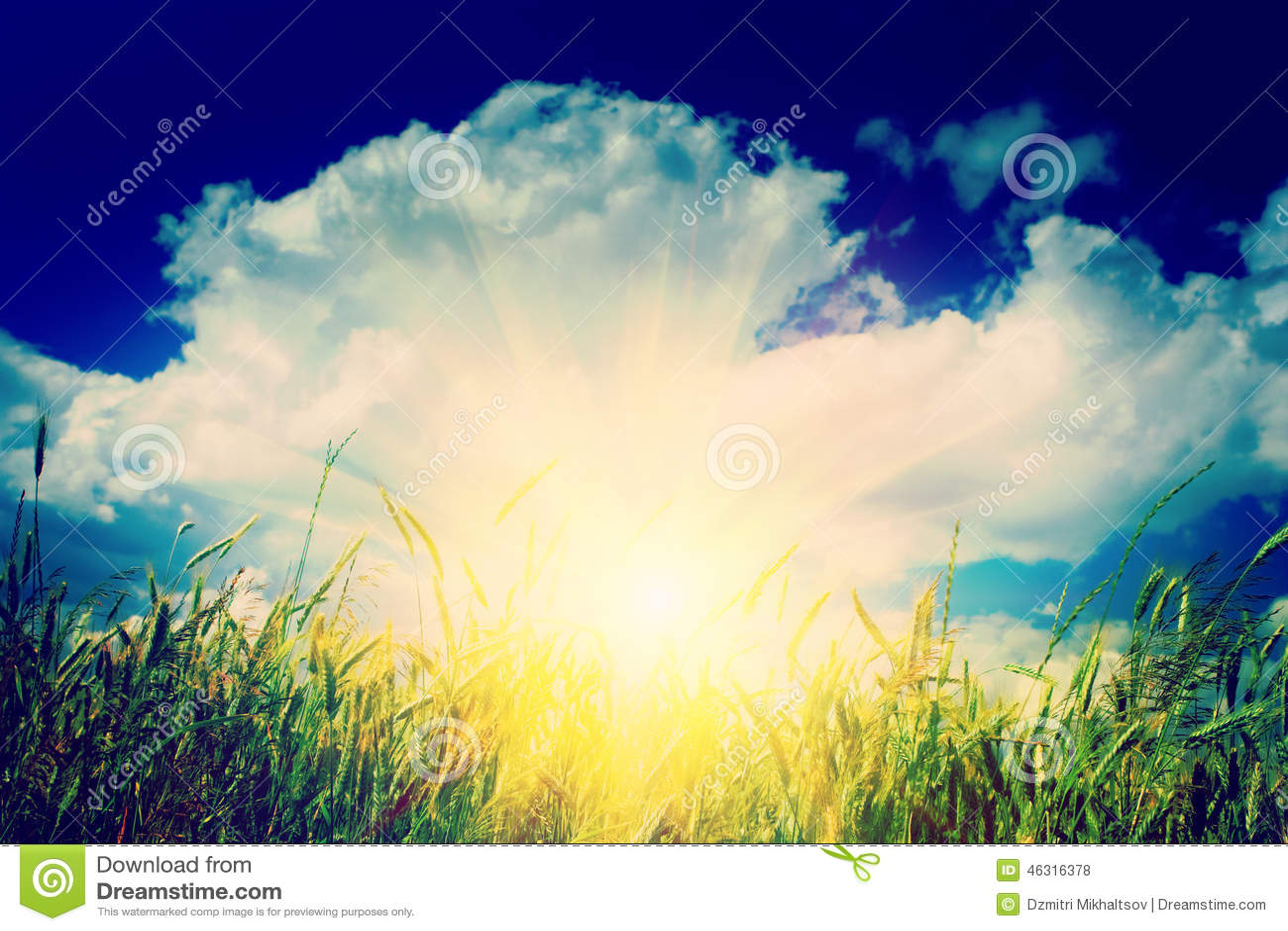 Sunrise on the wheat field instagram stile