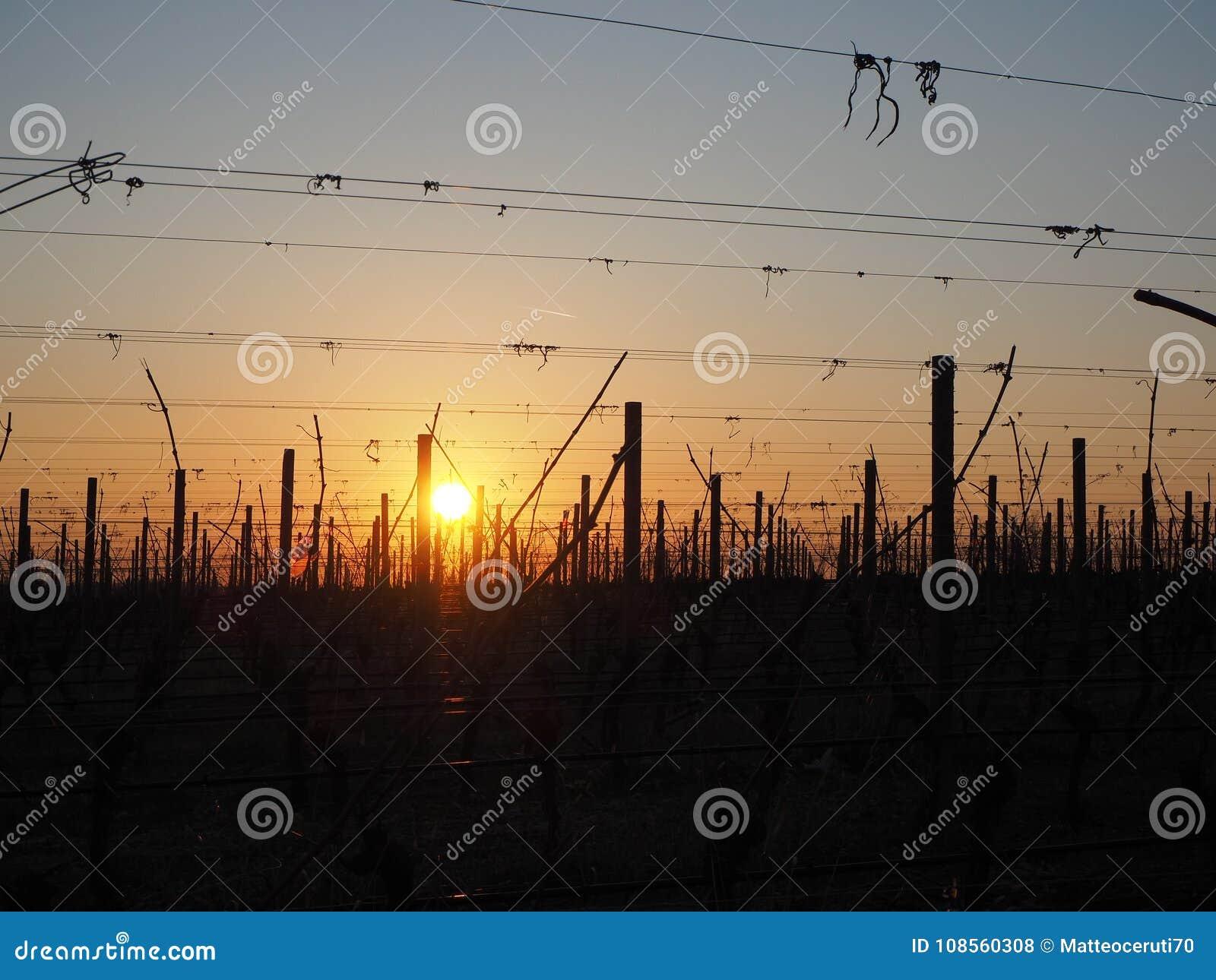 Sunrise in the winter on the hills of the vineyards near Lake Garda