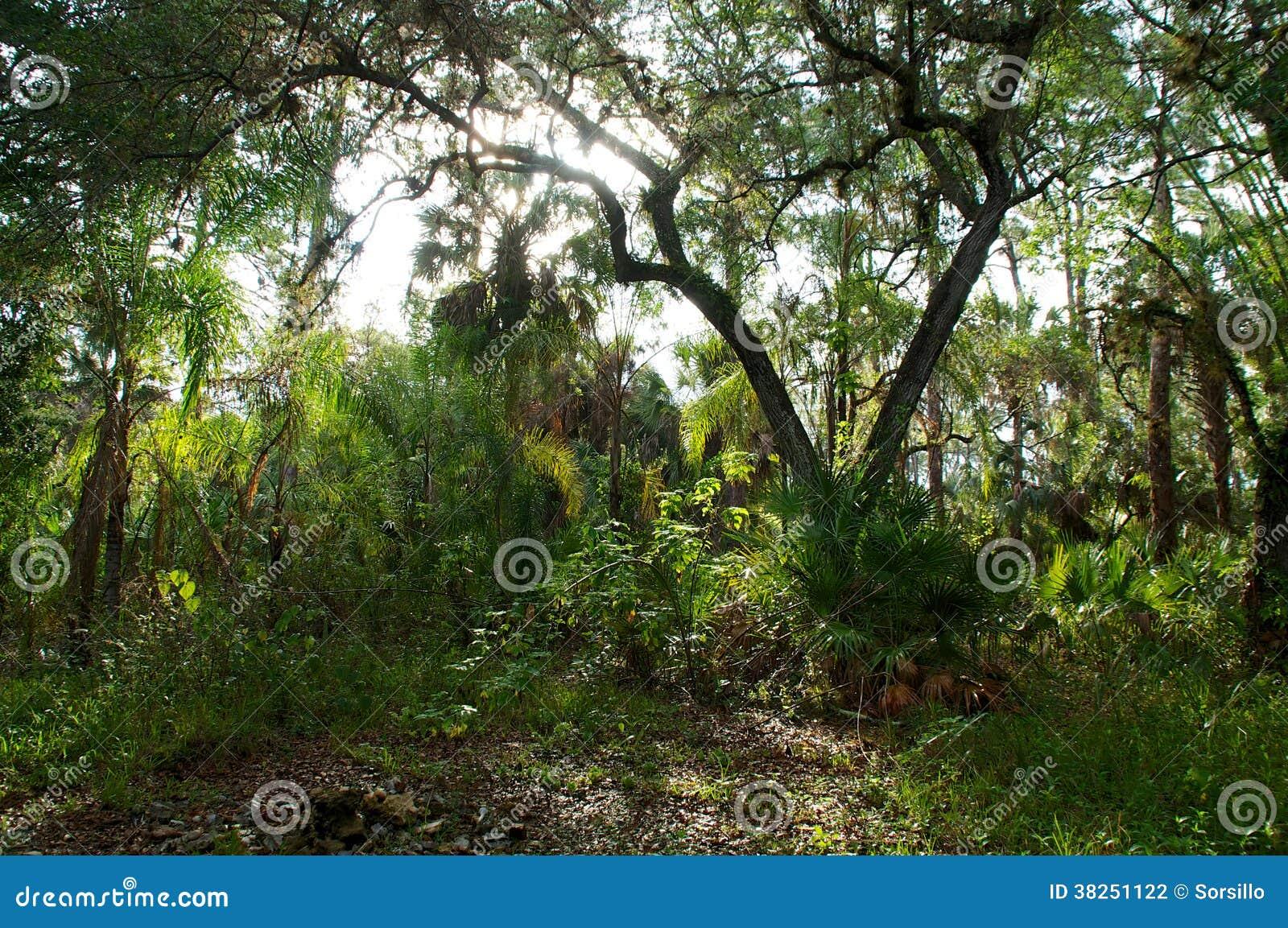 Sunrising над субтропическим лесом