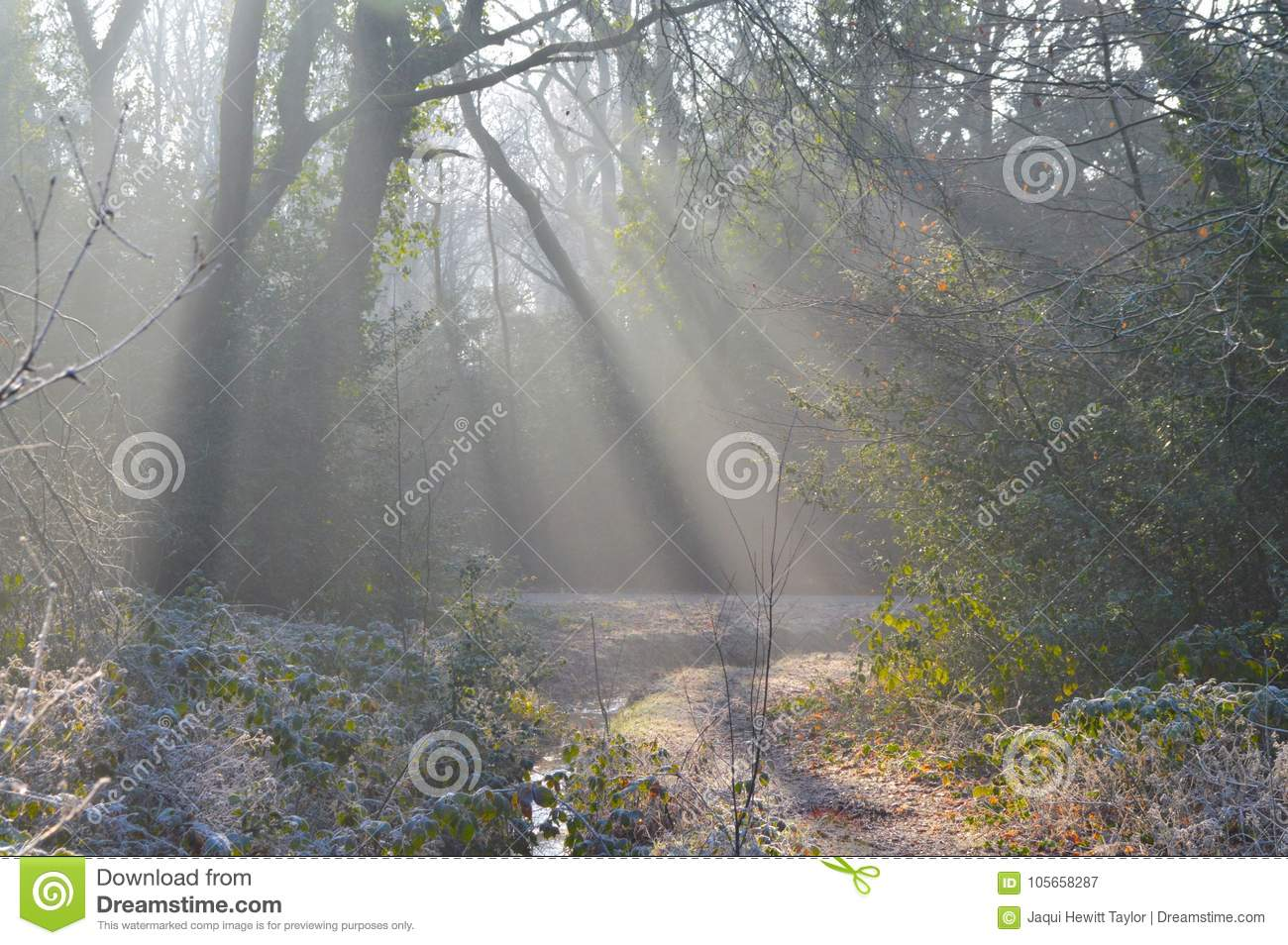 The suns rays on a wintry morning on Southampton Common