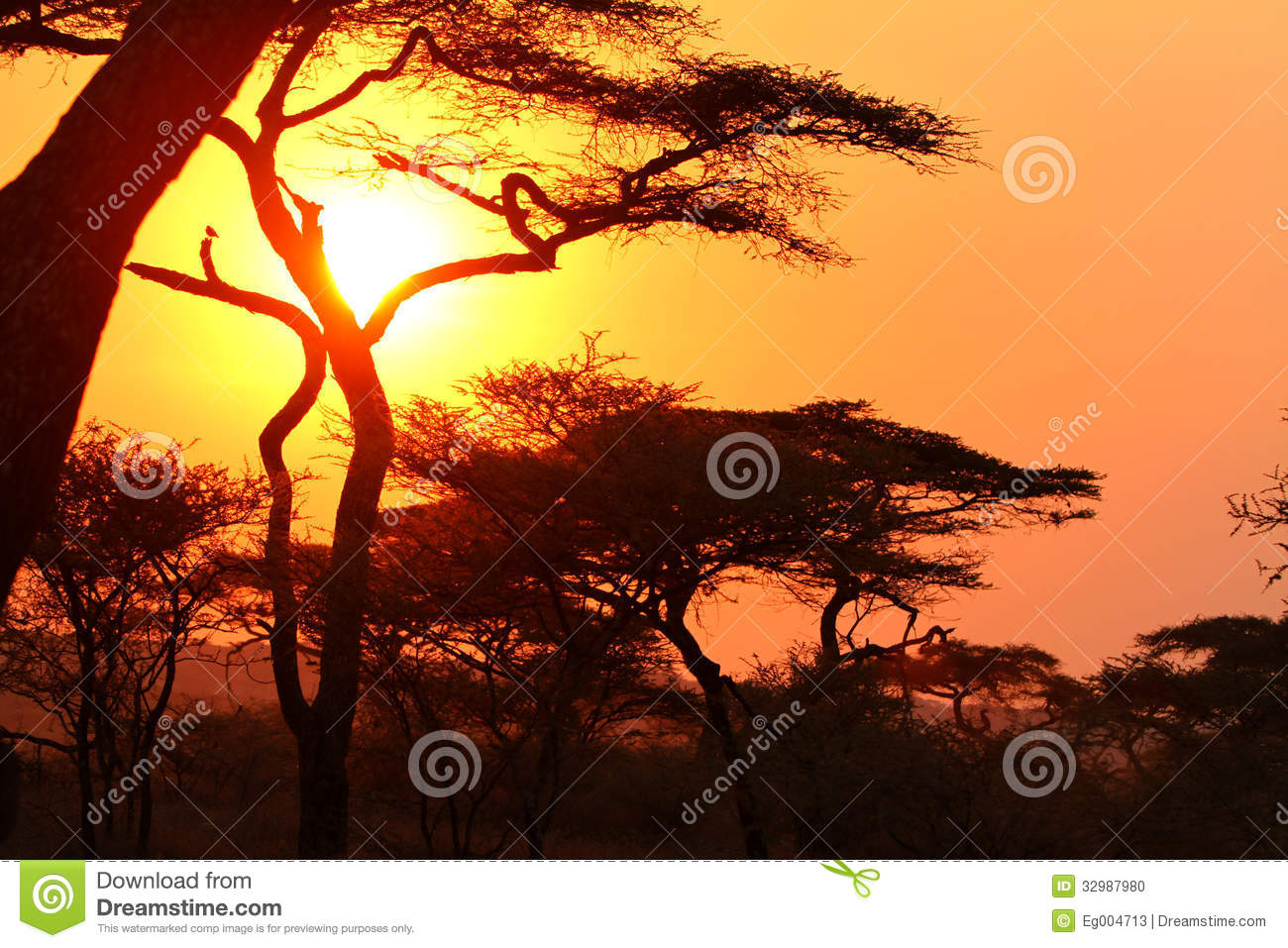 Sunset in the African bush