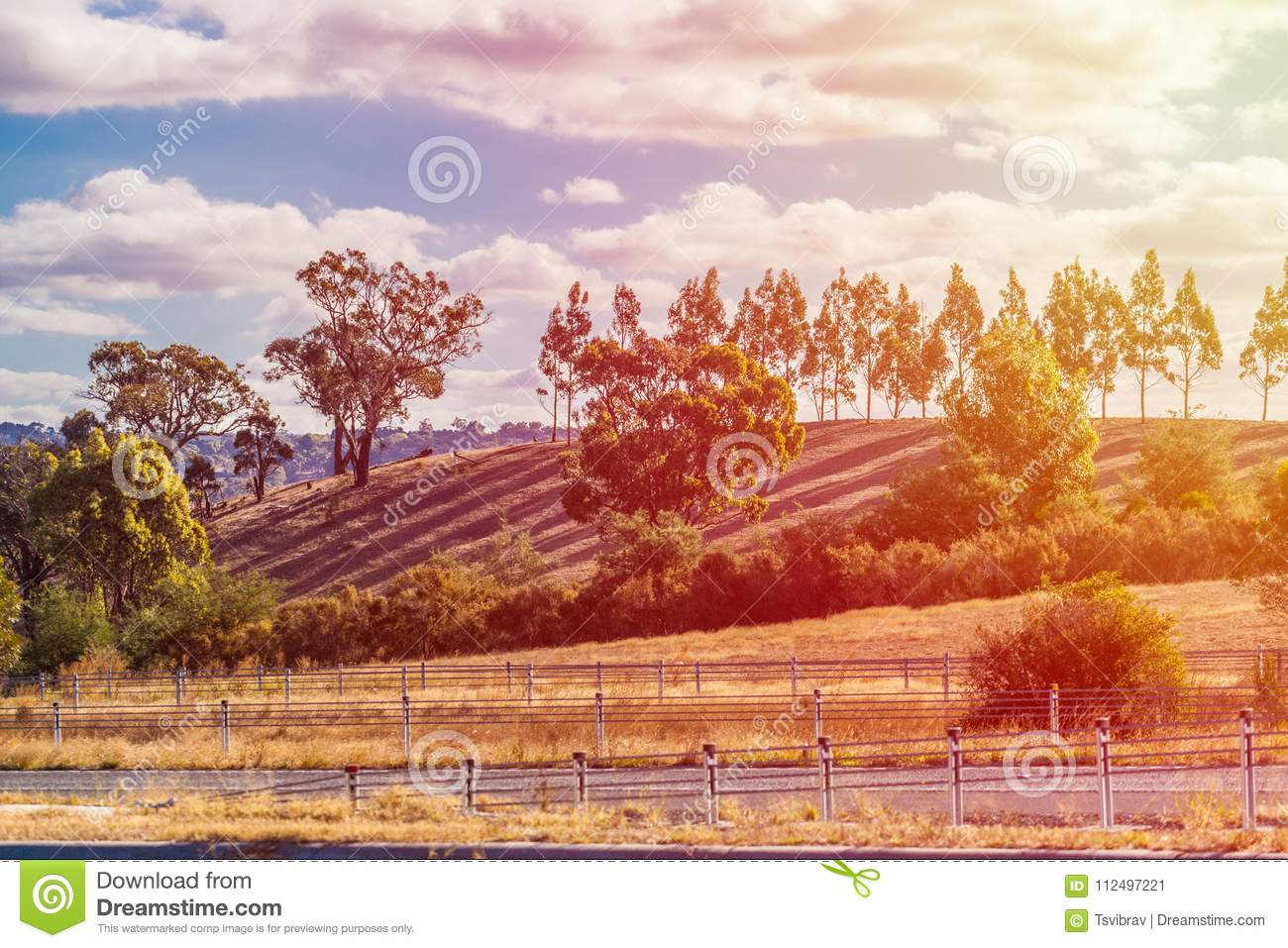 Download Sunset In Australian Countryside. Long Shadows From Trees And Sun Flare Stock Image - Image of sunrise, agriculture: 112497221