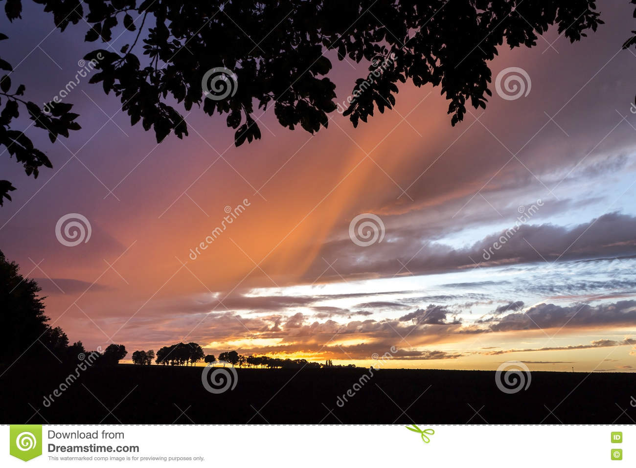 Sunset Autumn or Summer Sky with Trees