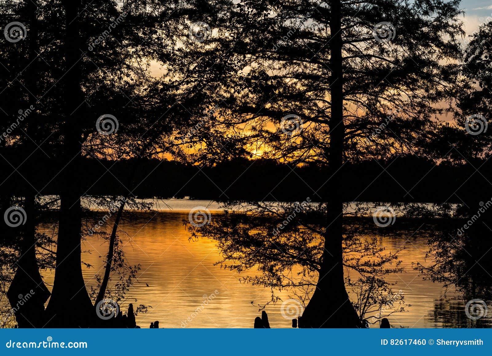 Sunset Through Bald Cypress Trees in Virginia Beach, Virginia