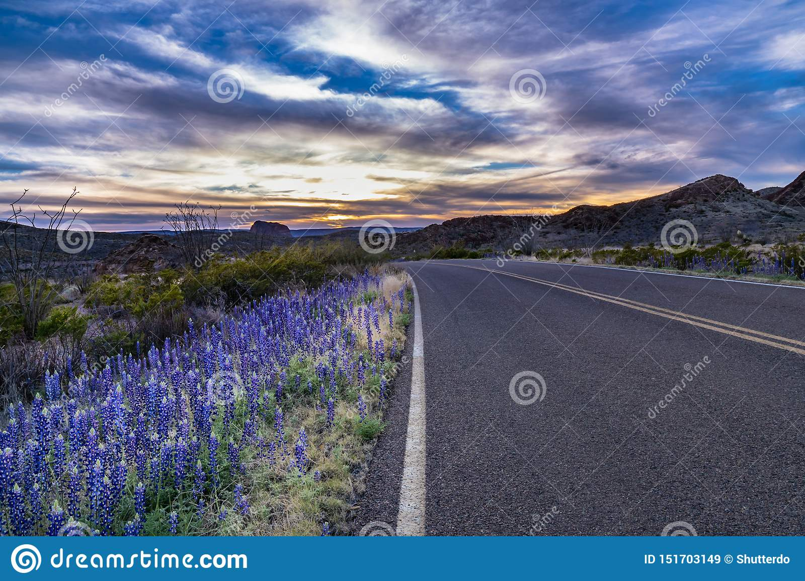 Sunset in Big Bend with blue bonnets along the road