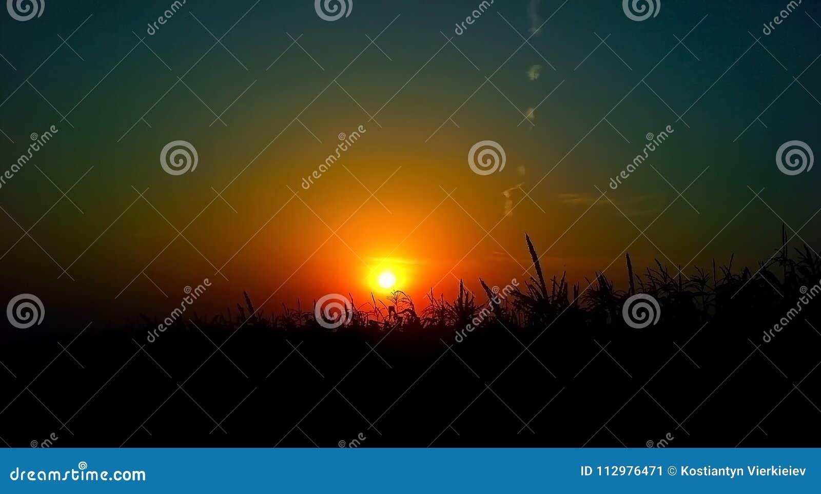 Sunset on the cornfield in Ukraine