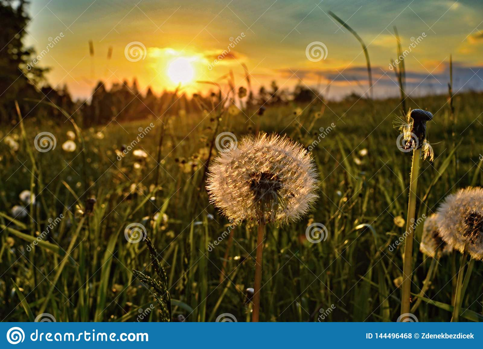 Sunset with dandelion in the foreground.