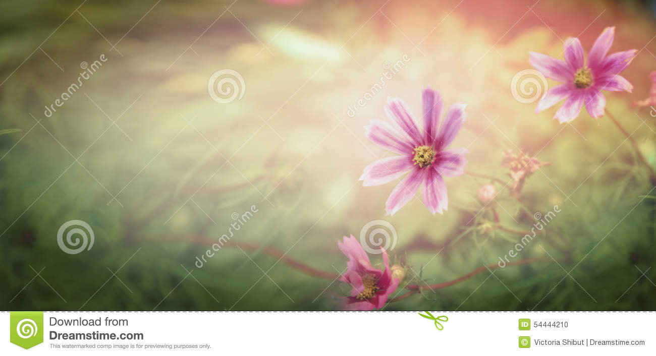 Sunset flowers on nature background, banner