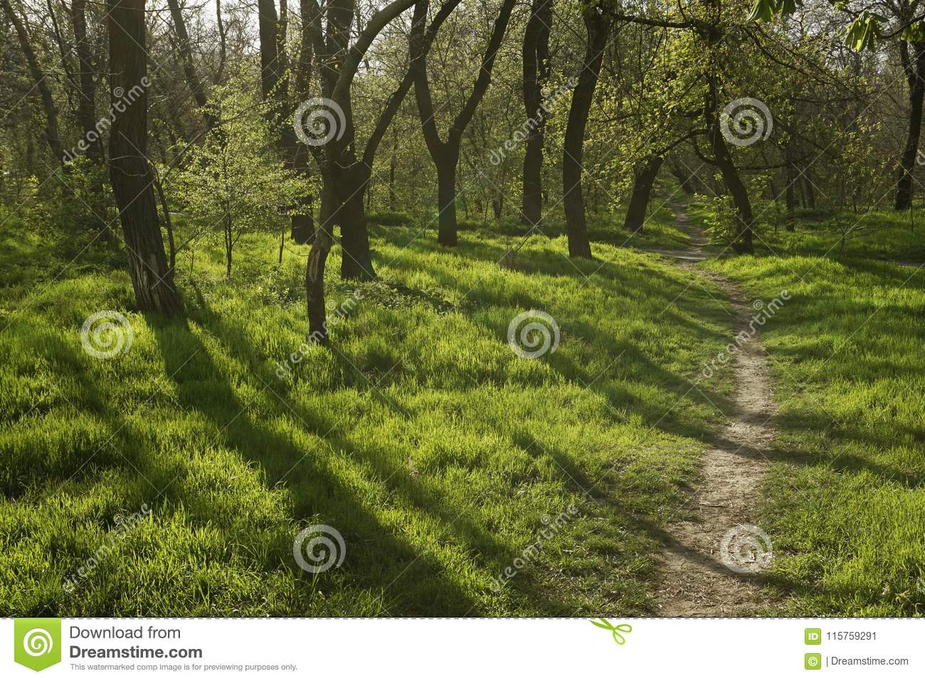 Sunset in the forest with long tree shadows and green grass