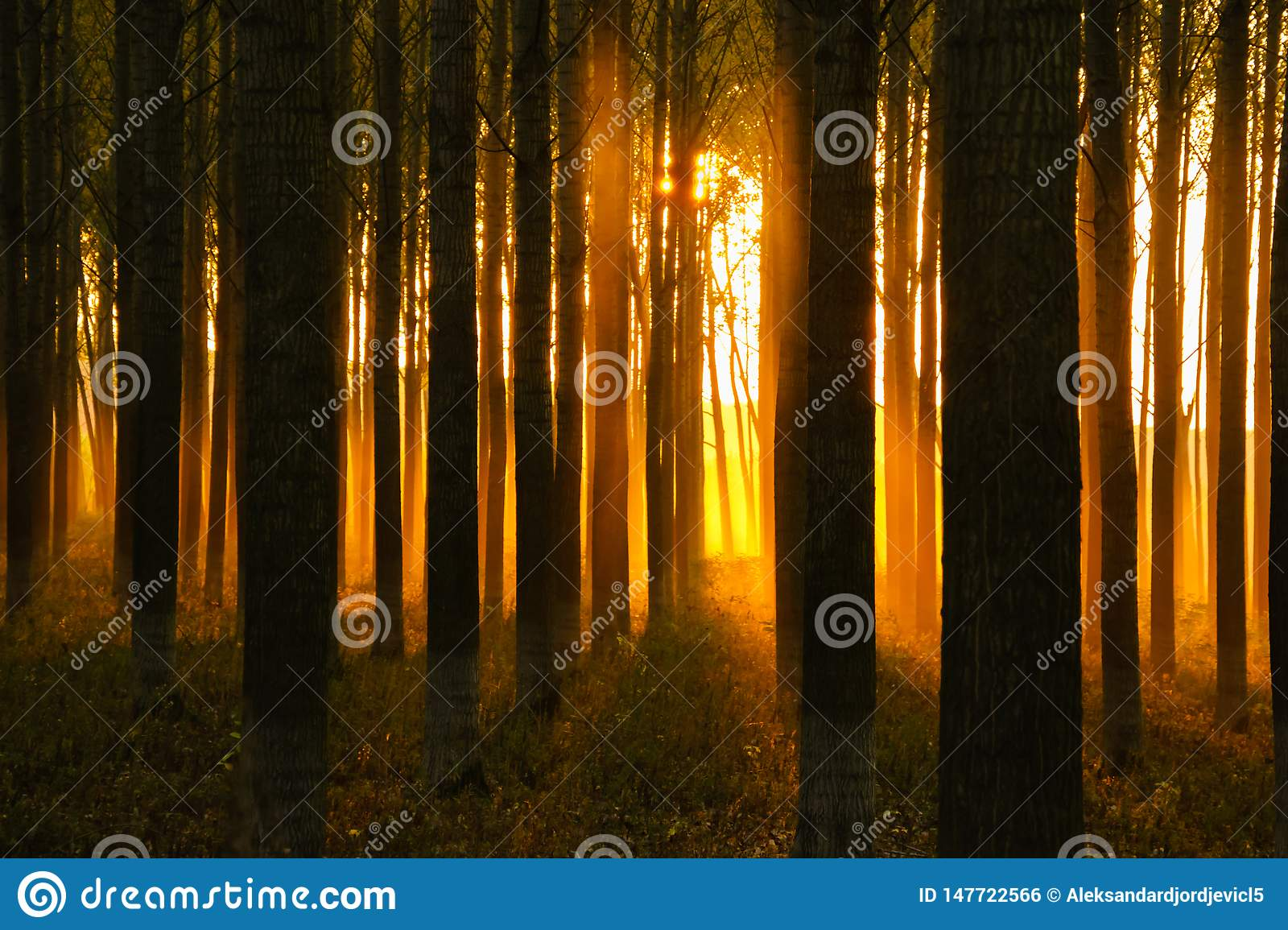 Mystic sunset and sunlight in dense forest