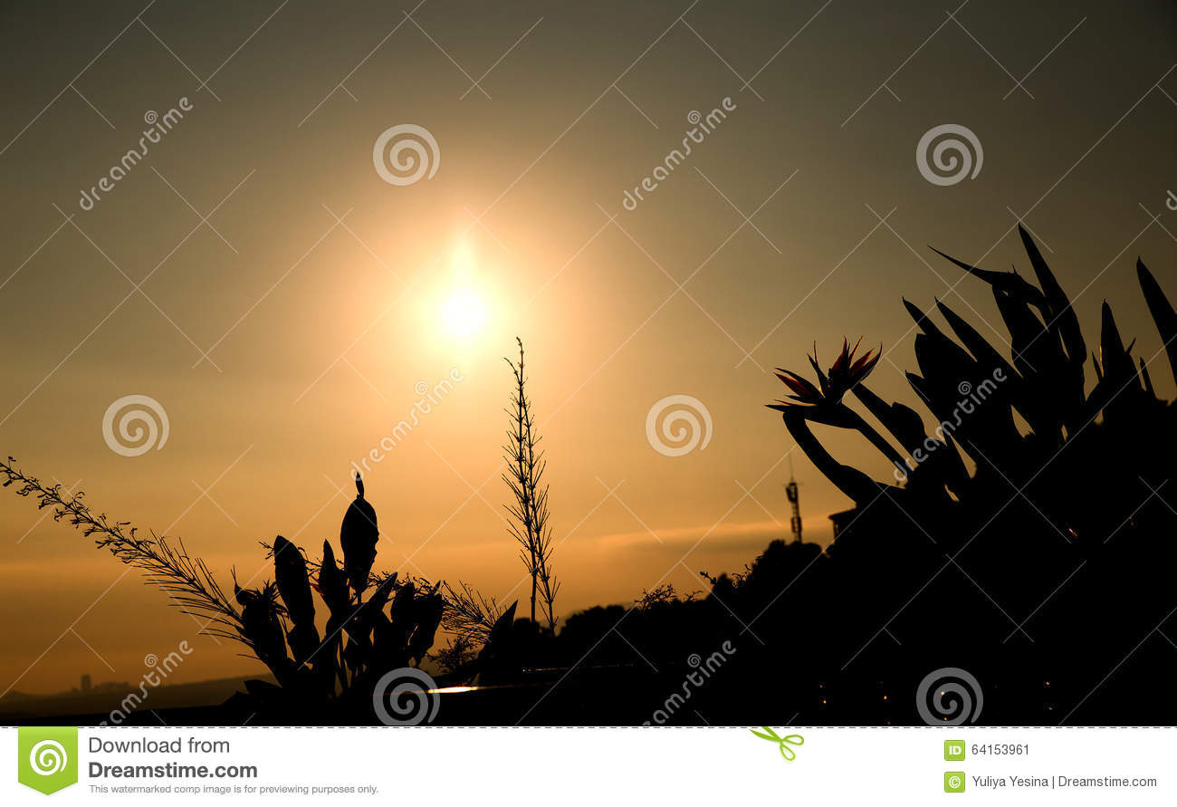 Sunset/grass flower with sunset background