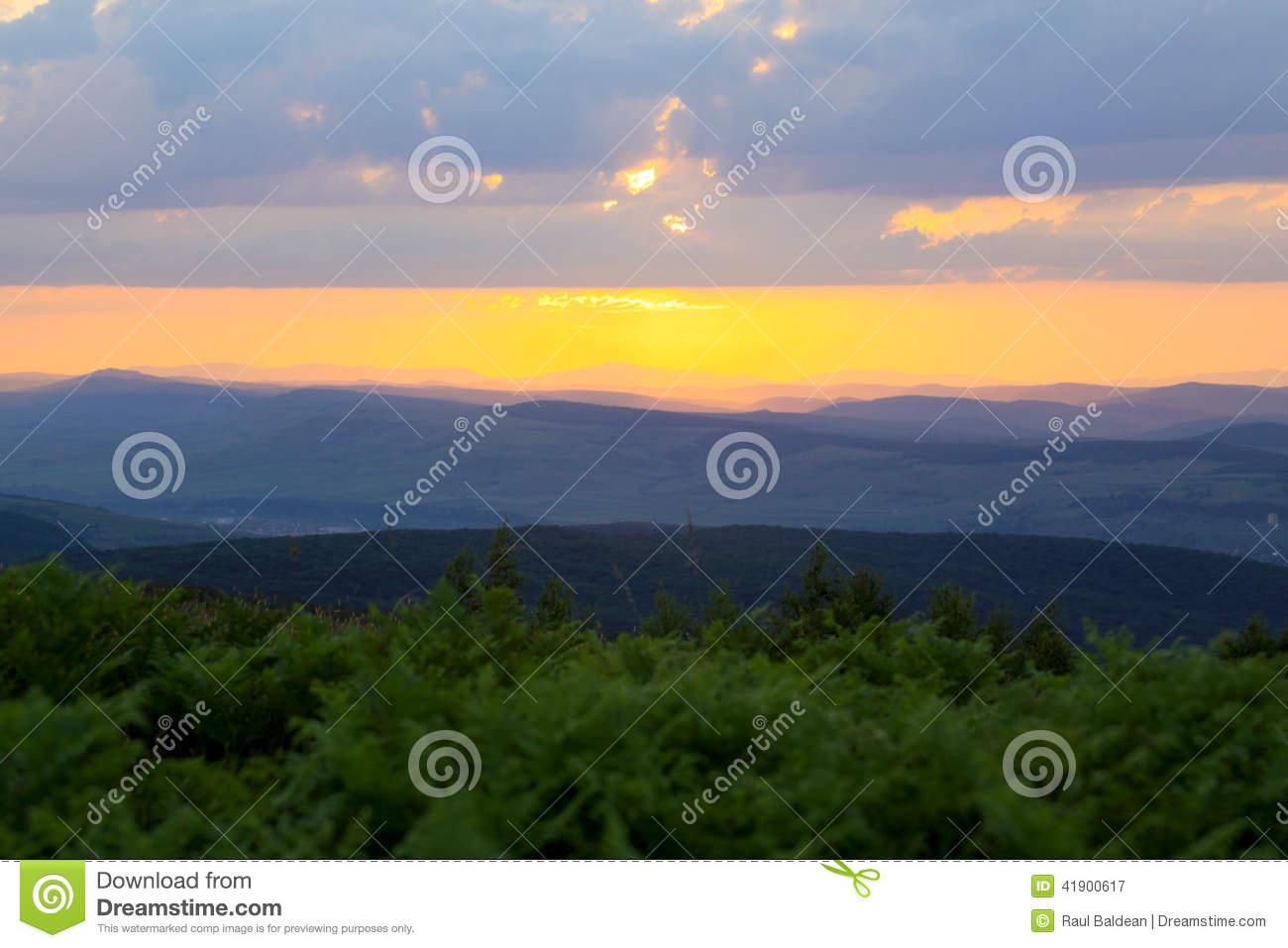 Sunset with green vegetation