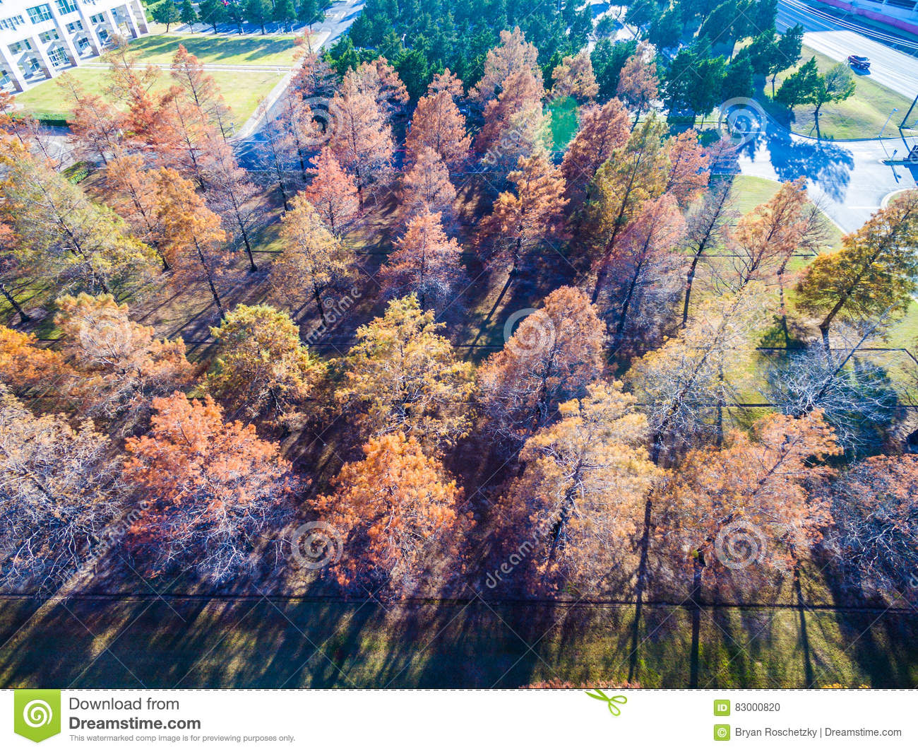 Download Sunset Long Shadows Aerial Over Winter Trees Brown And Dropping Their Leaves Rows And Rows Stock Photo - Image of rows, forest: 83000820
