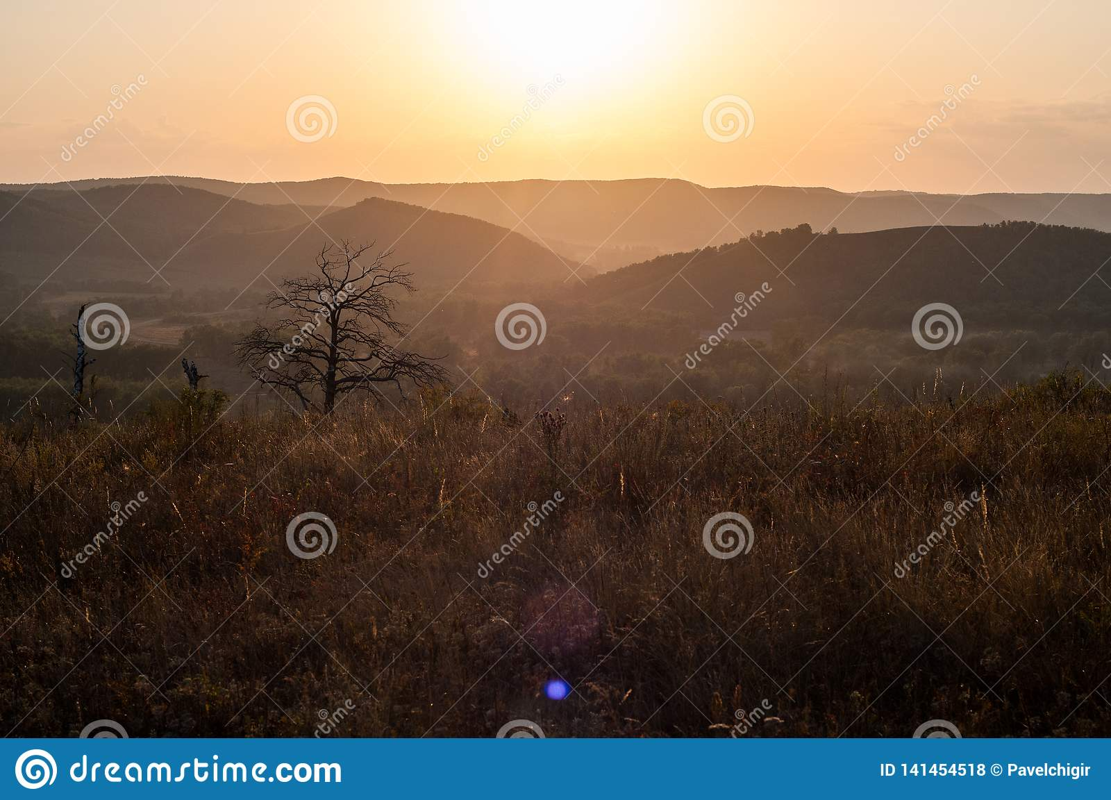 Sunset in the mountains, in the foreground spruce and several tree trunks