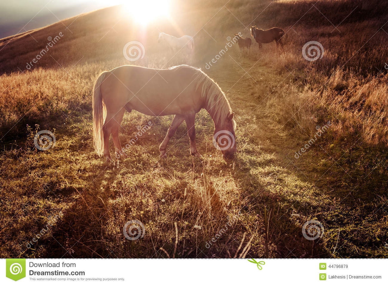 Download Sunset In Mountains Nature Background. Horses Silhouette At Haze Stock Image - Image of hipster, freedom: 44796879