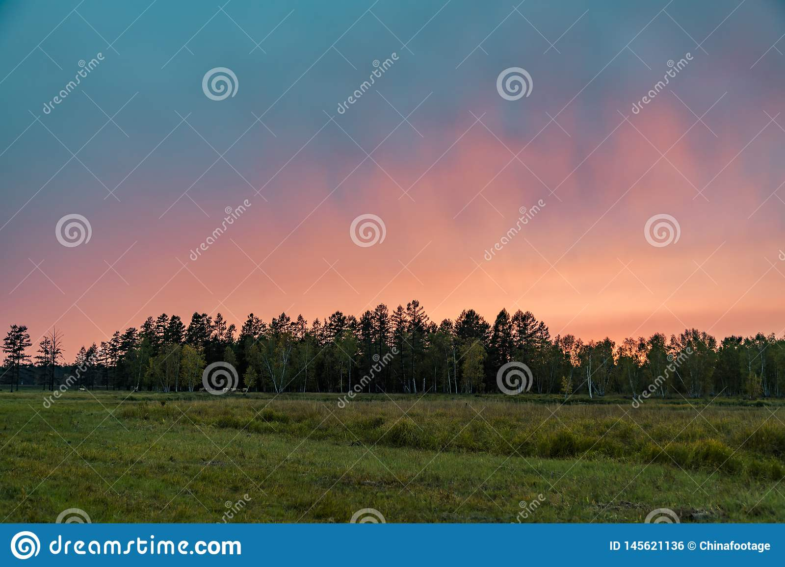 Sunset over the forest. Portrait of Sunset over the forest