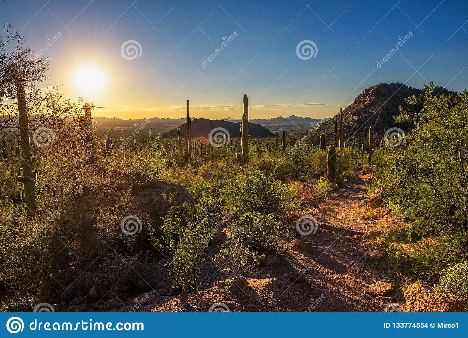 Sunset over hiking trail in Saguaro National Park in Arizona