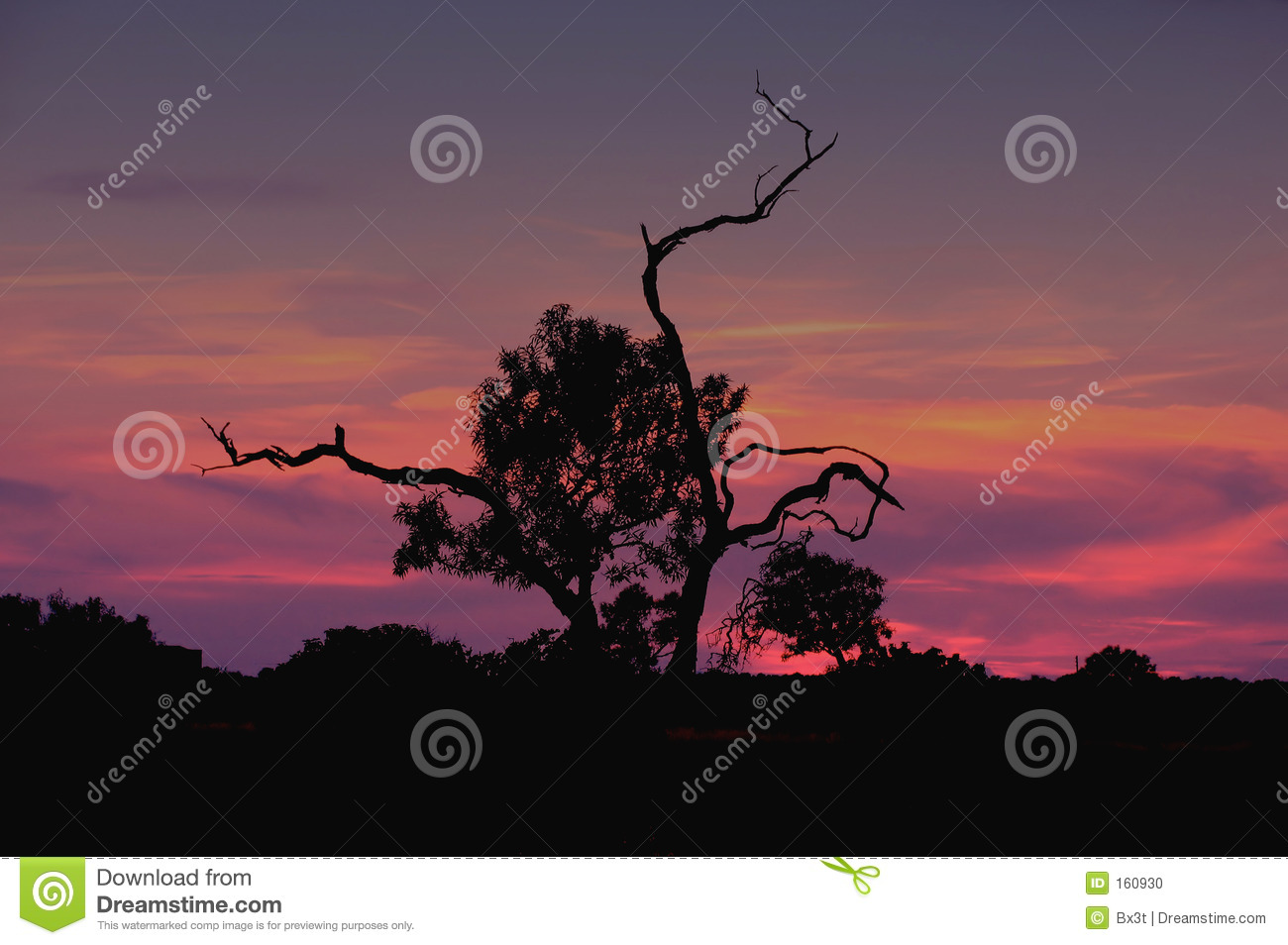 Sunset Over Olive Tree