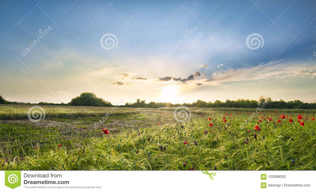 Sunset over red poppies in the Italian countryside