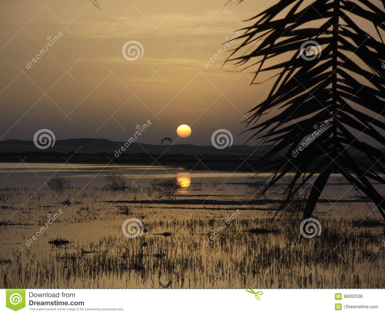 Sunset Over Siwa Oasis