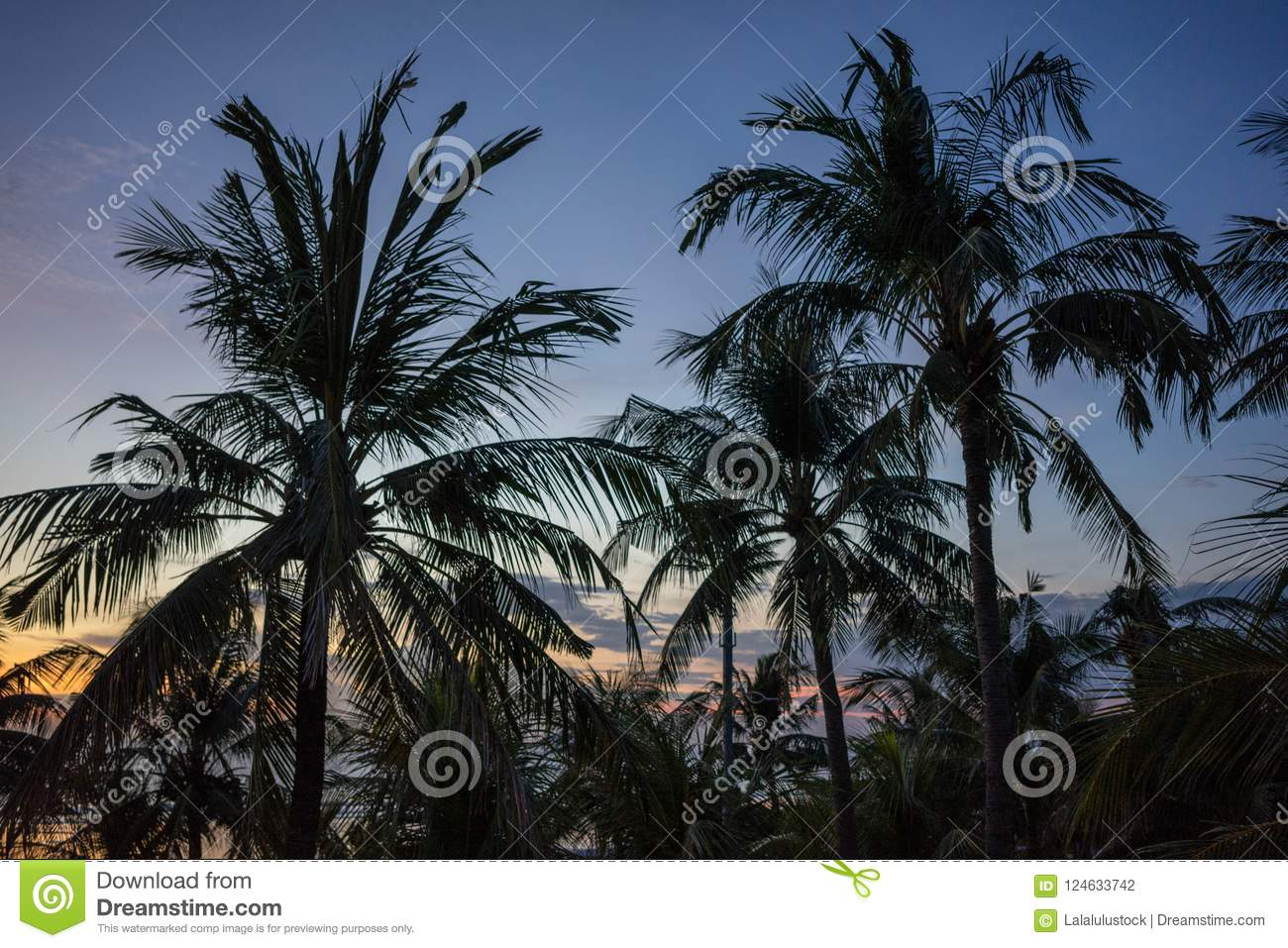 Sunset with palm tree and colorful sky