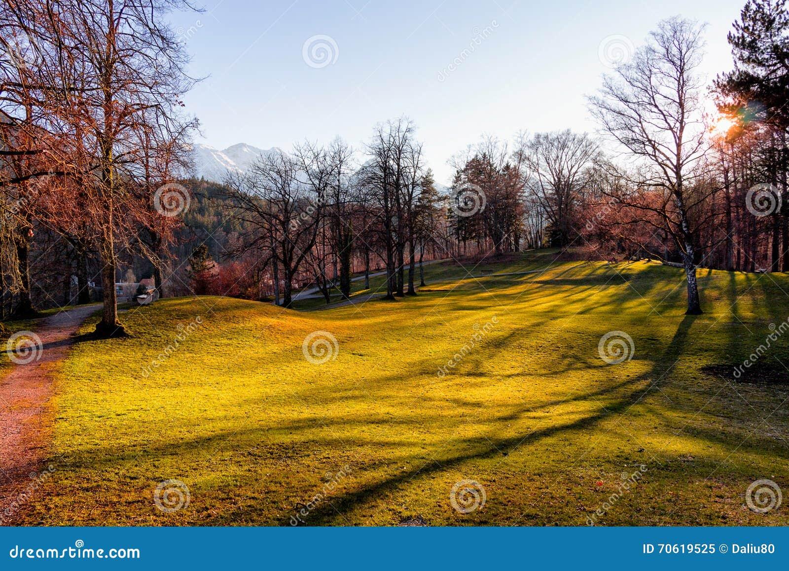 trees germany grass - photo #23