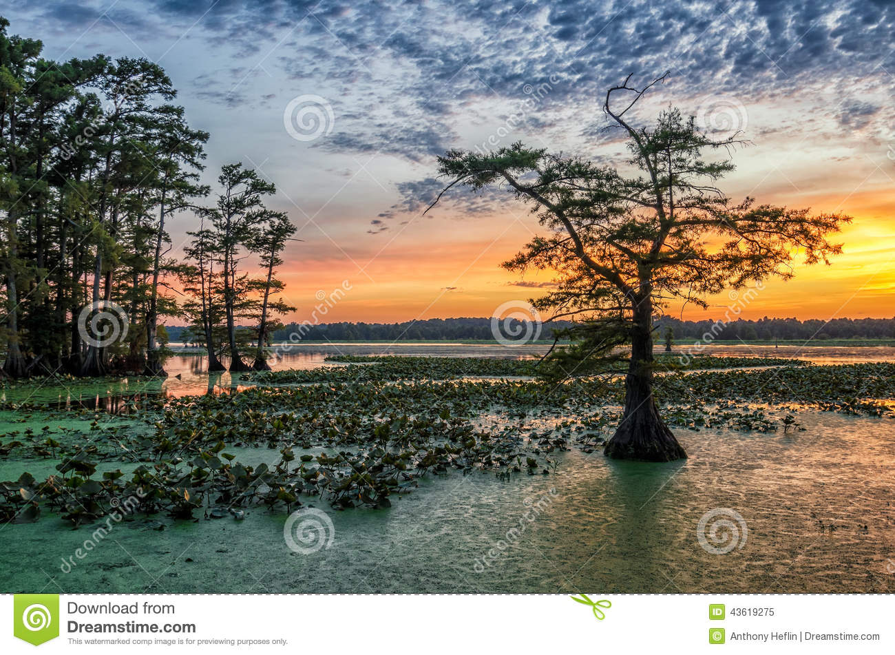 Sunset, Reelfoot Lake in Tennessee