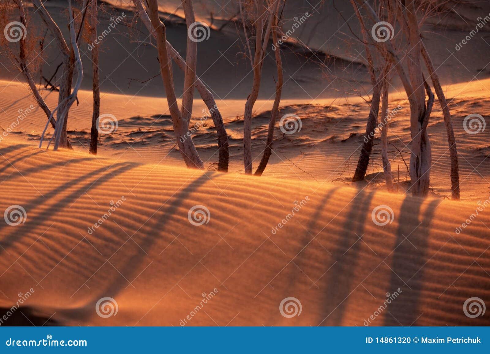 Sunset in sand desert