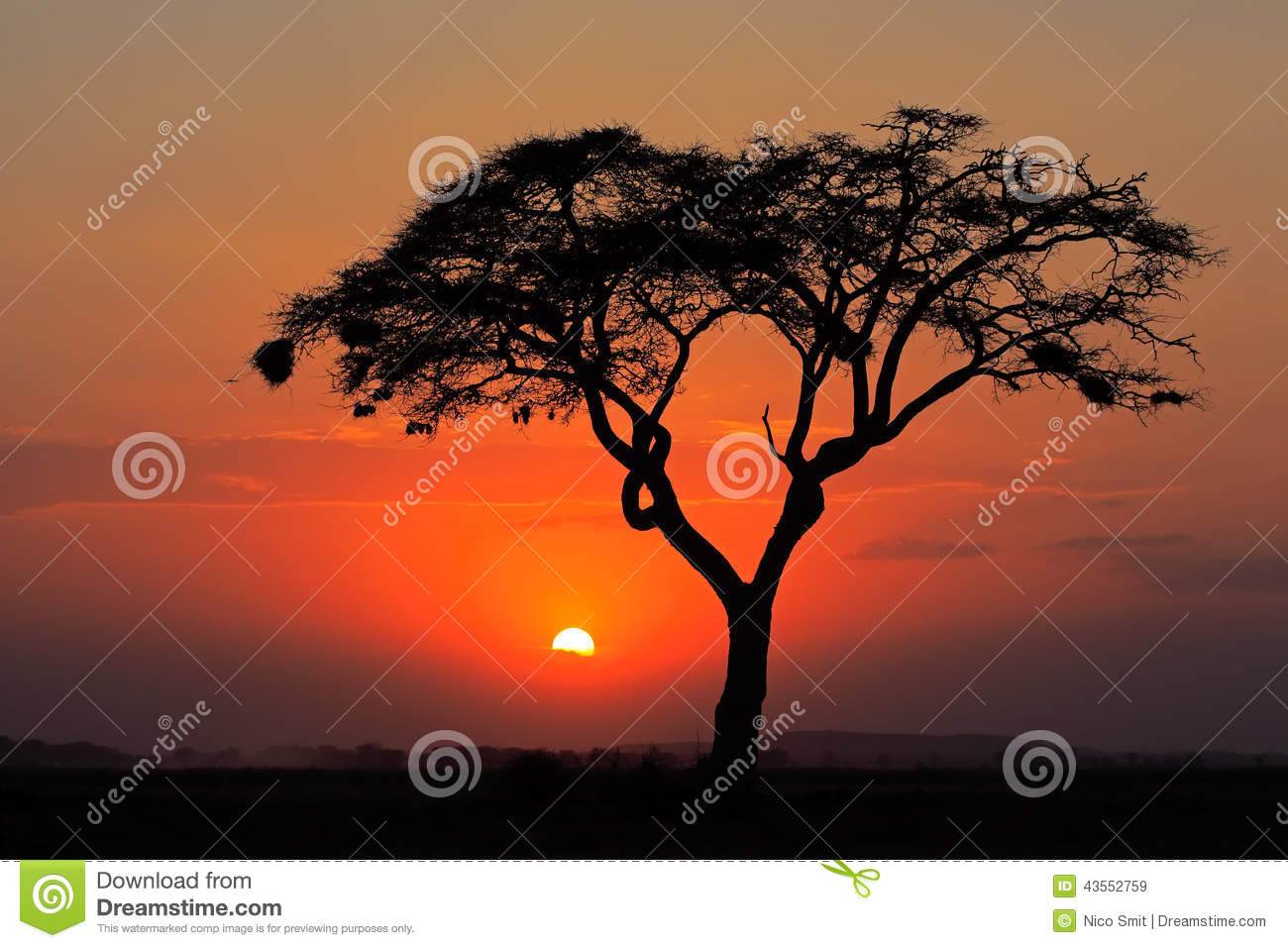Sunset with silhouetted tree stock photo image 43552759 for African sunset wall mural