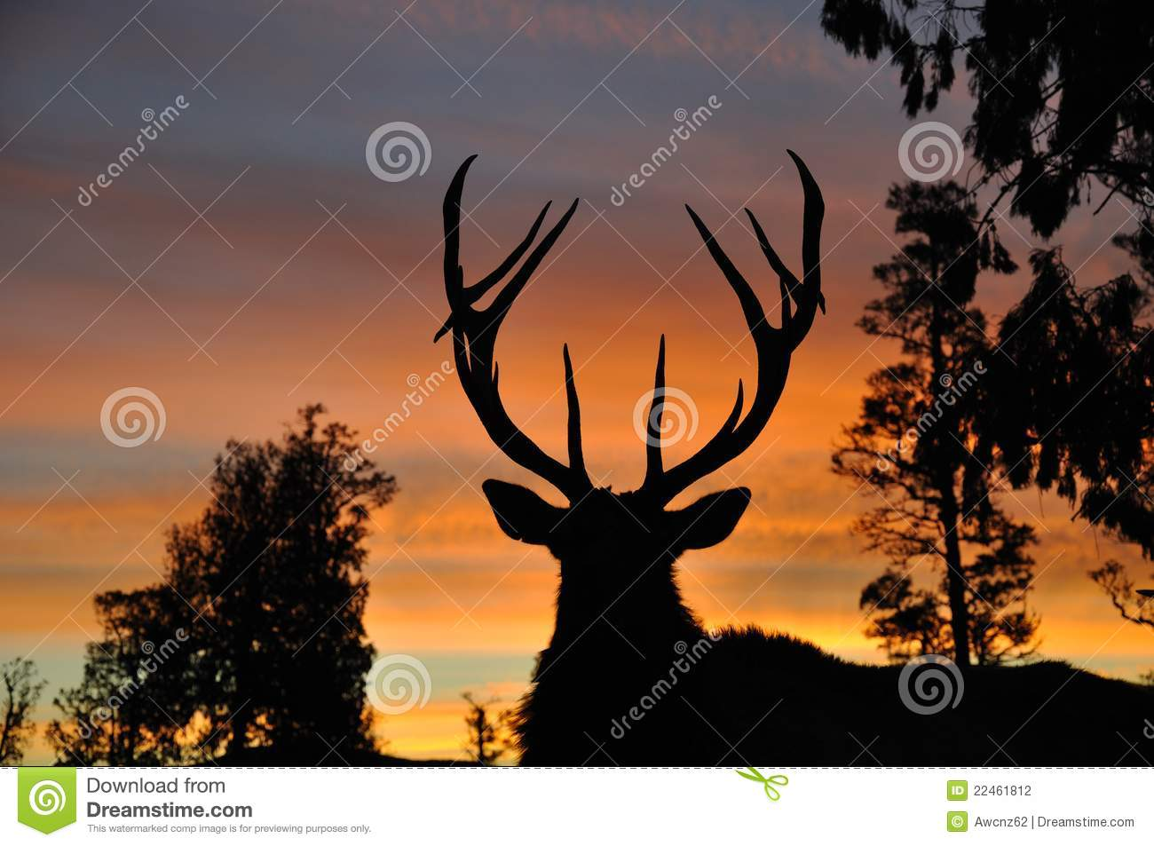 Sunset stag