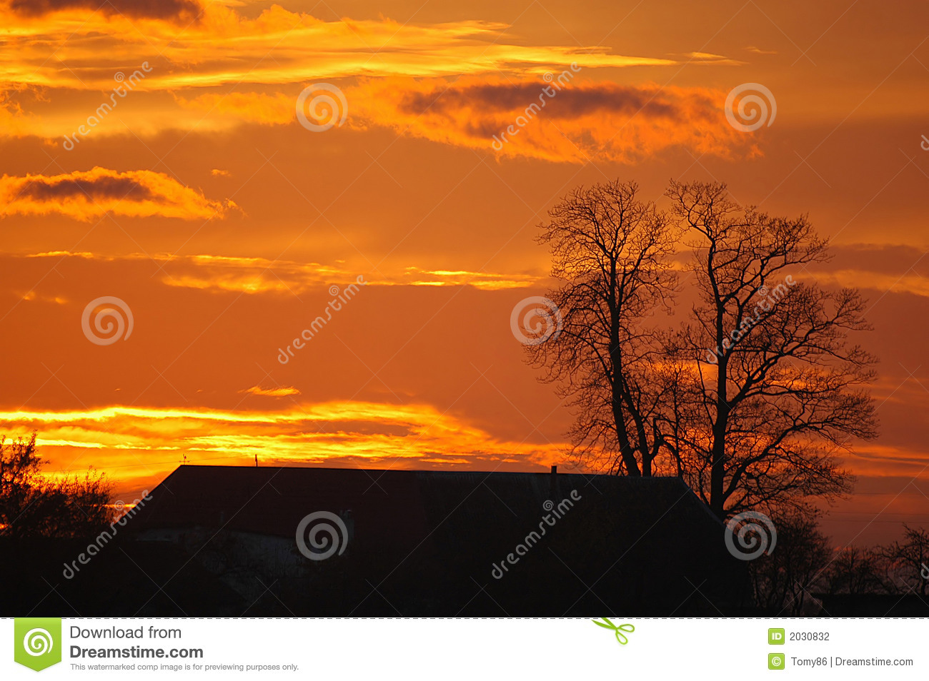 Sunset with tree background
