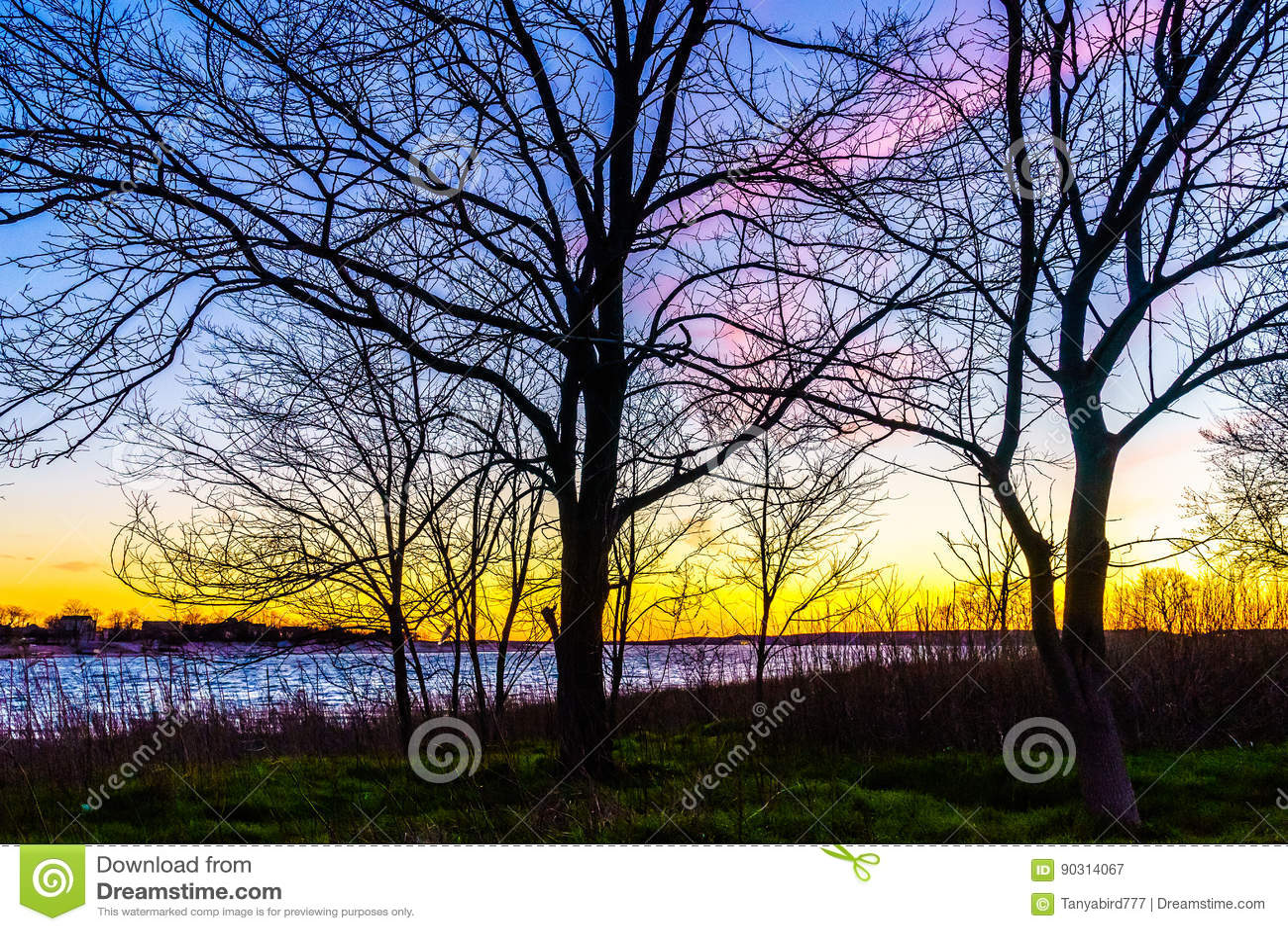 Sunset through a tree in Calvert Vaux Park