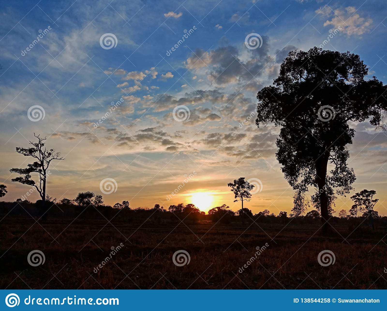 Sunset view in farm