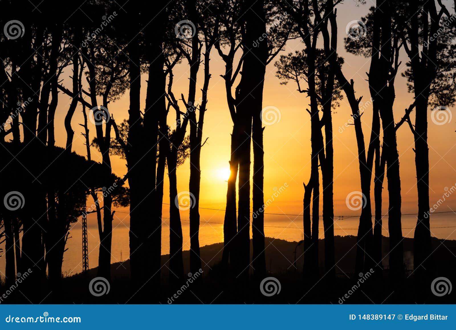 Sunset during walking in Nature