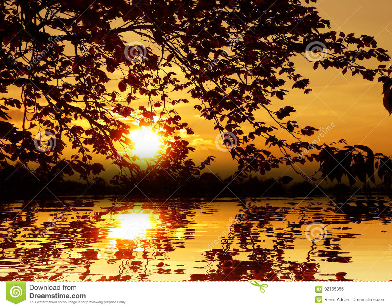 Sunset in the water among the leaves nature background wallpaper