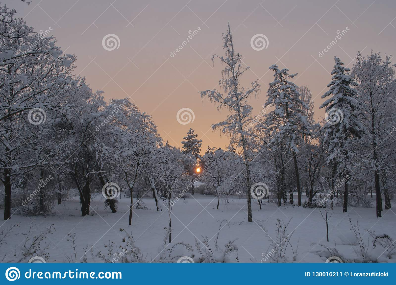 Sunset winter colors in a huge park with a trees covered with snow