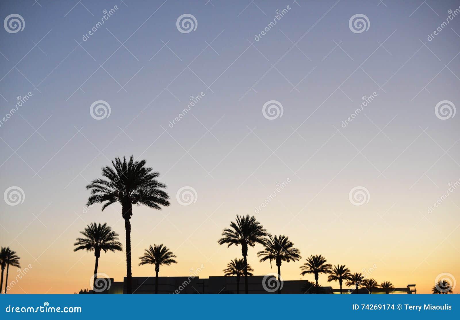 Sunsetting niebo nad palmami w Pasadena