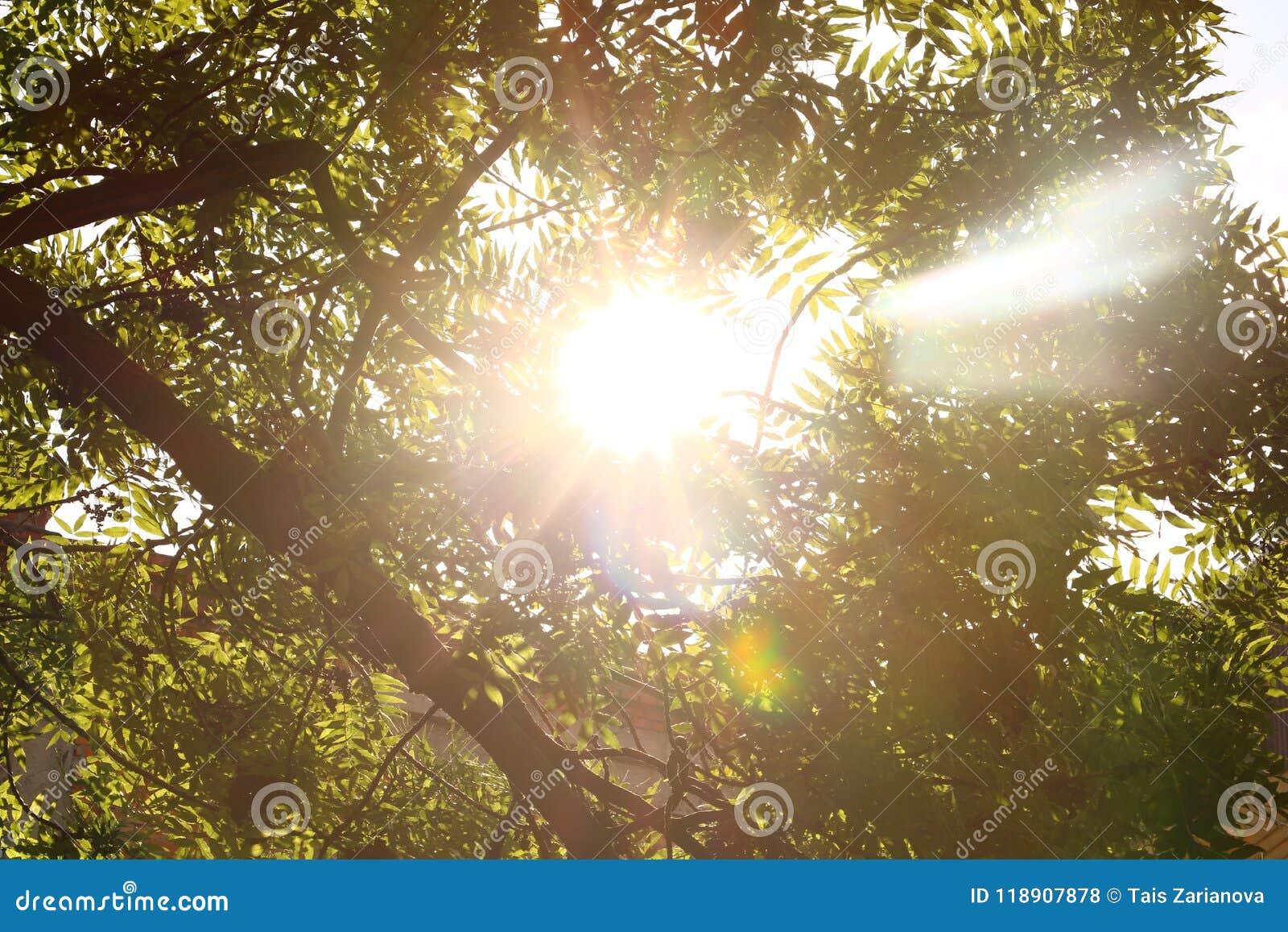 Sunshine céu Sol brilhante no céu Círculos da luz solar Um círculo solar, um alargamento solar brilhante, raios em ramos verdes,